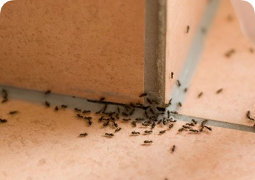 Termite control specialists at C.C. & Company will protect your home from further damage.